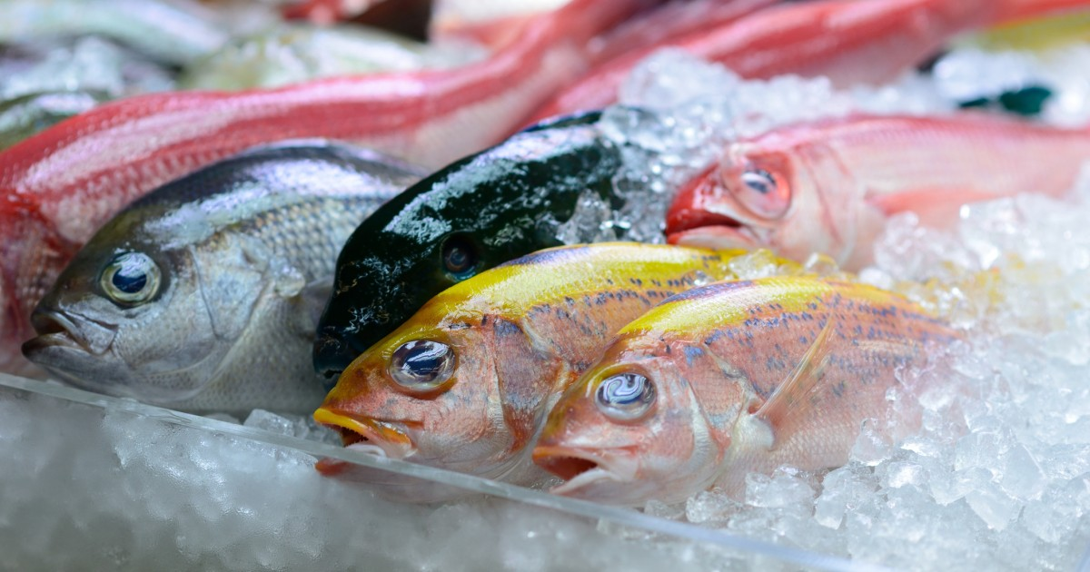 Fish feel pain so why do you eat them mercy for animals for Do fish feel pain