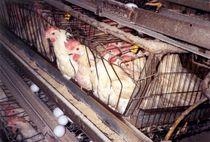 eggfarm02a.jpg
