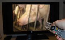 tv2012.jpg