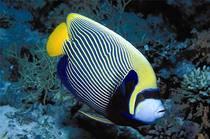 saltwater-fish-7.jpg