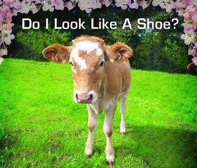 Mink blog image 3.jpg
