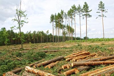 DeforestationPhoto.jpg