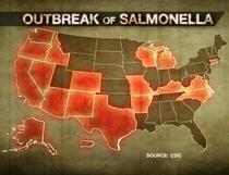 salmonella outbreak.jpg