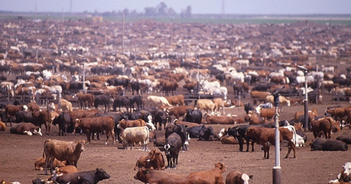 """an argument against factory farming Exploring their environment5 but in the factory farms, """"tens of thousands of   we can formulate various arguments against industrial farming."""