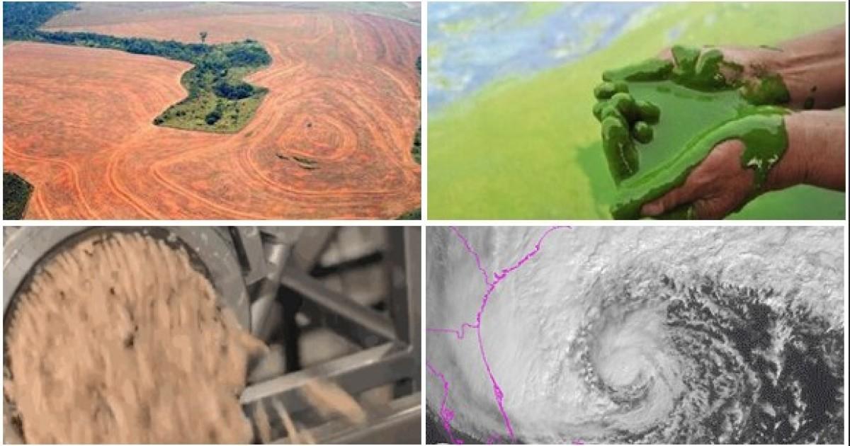 7 razones por las que las personas también debemos temerle a las granjas industriales.