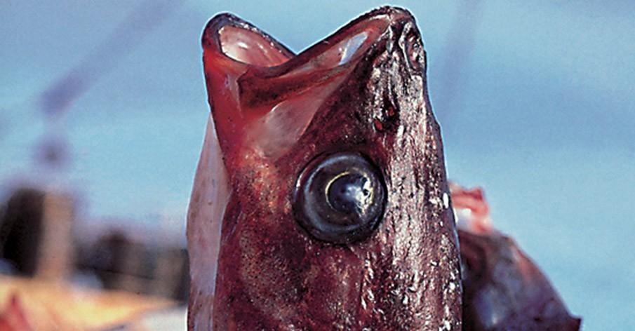 5 fatos que mudarão a forma como você vê os peixes
