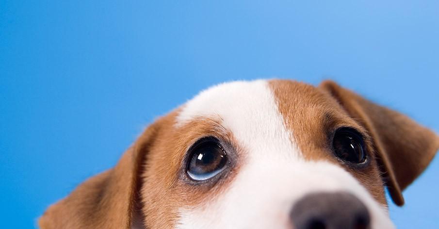 Você comeria o seu cachorro?