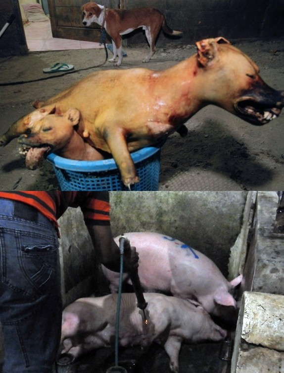 These Photos of the Dog Meat Trade Are Sad, but You Should See What