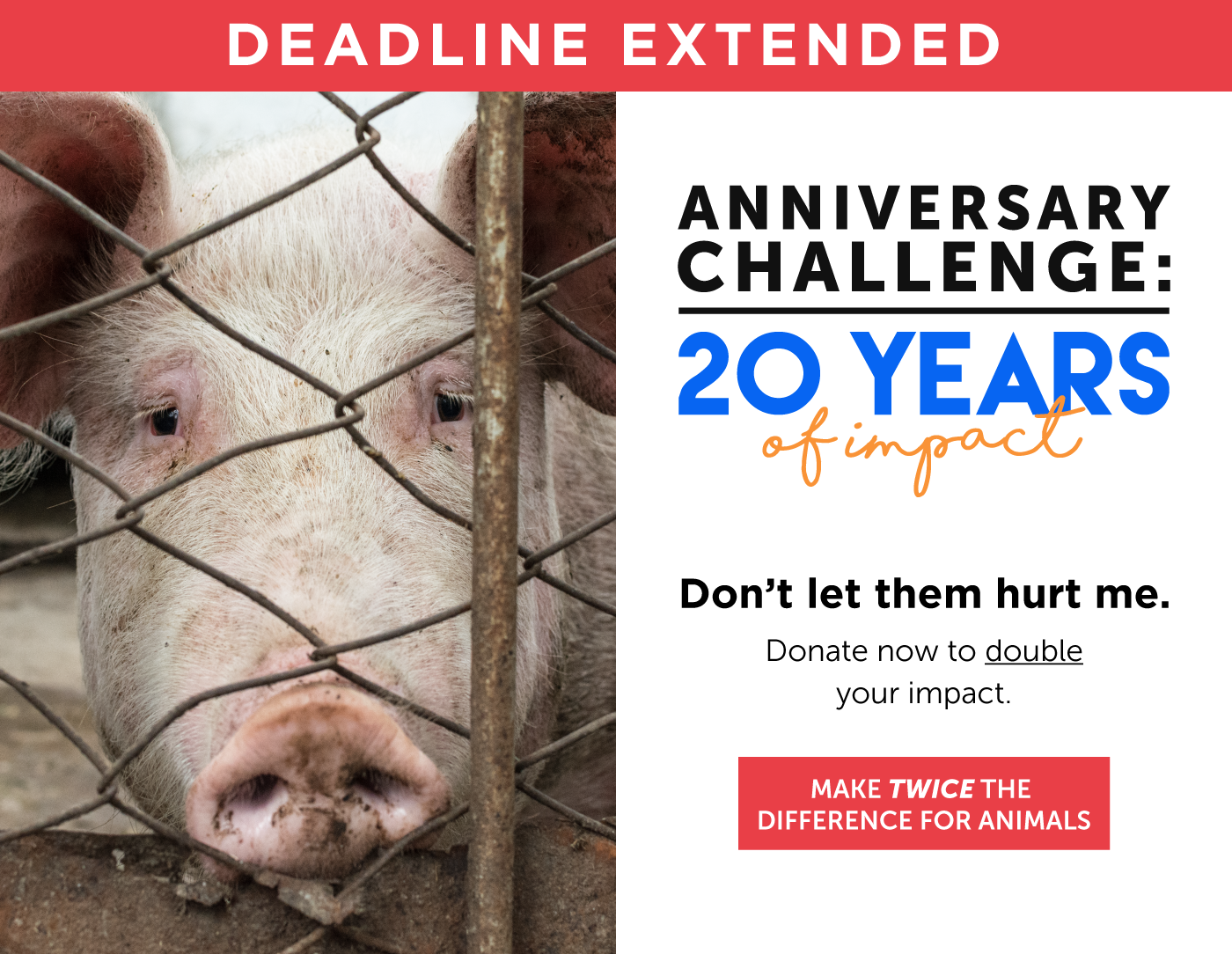 Mercy For Animals – World's Leading Farmed Animal Rights and Vegan