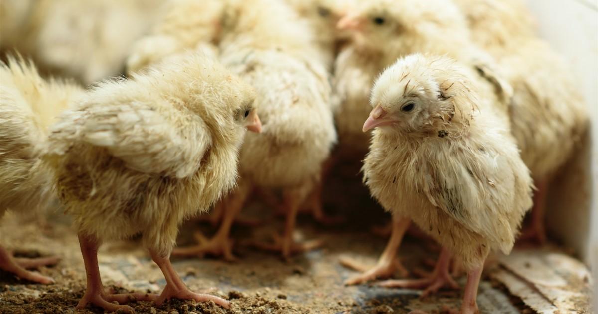 Si queremos prevenir futuras pandemias, debemos cambiar nuestra relación con los animales