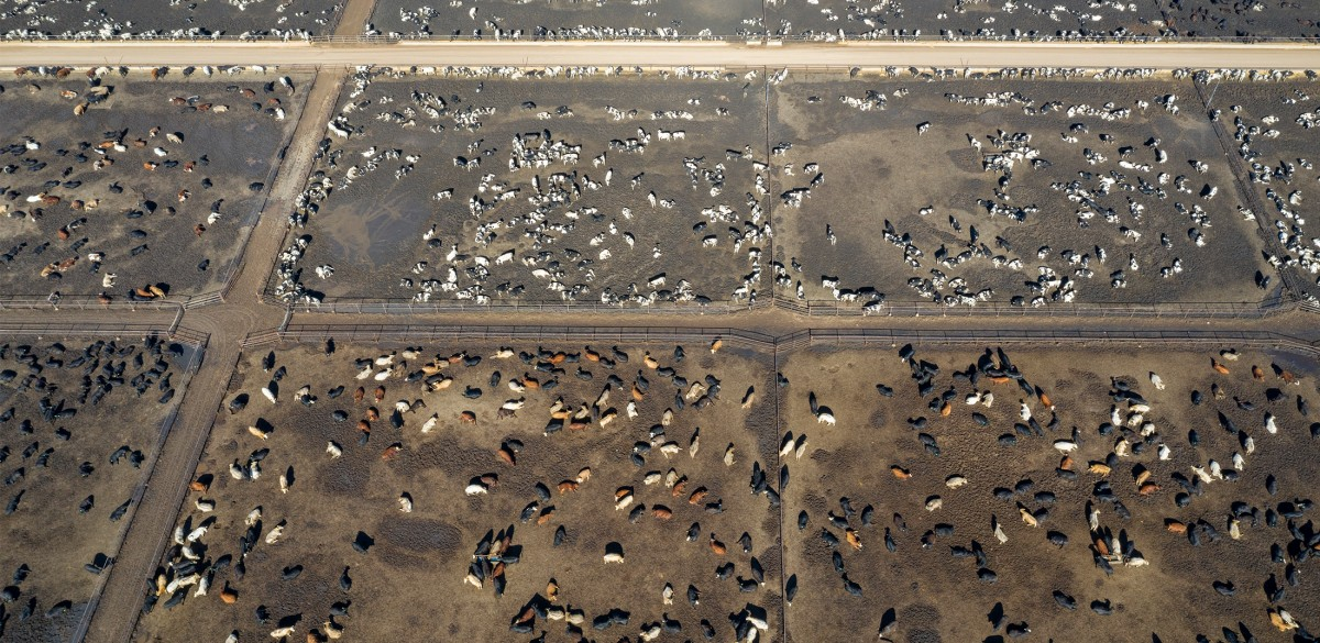 How the Meat Industry Thrives on Environmental Racism