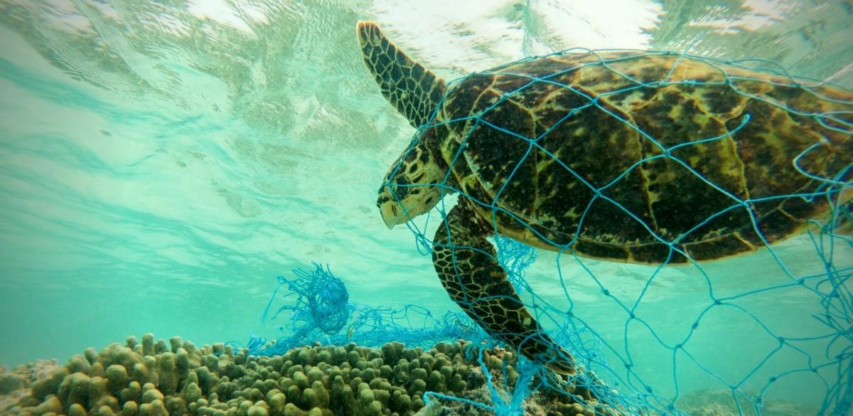 """México dice """"no"""" a las redes de pesca fantasma, pero aún hay mucho por hacer para ayudar a los peces"""