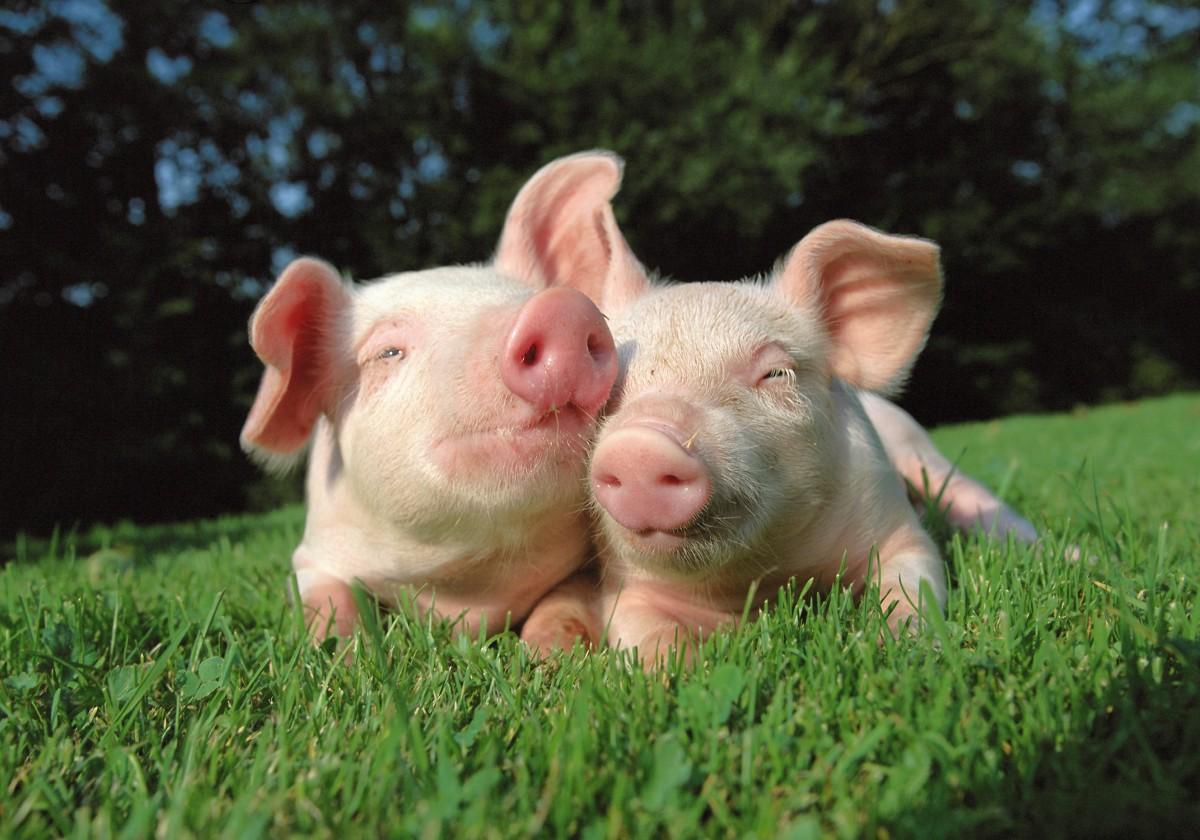 Saiba como você pode ajudar os animais em dobro até o final do ano