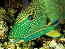 fishpic2.jpg