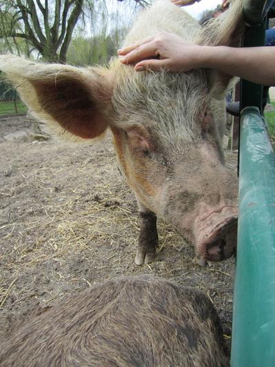 New York Road Trip to Catskill Animal Sanctuary - Mercy For Animals